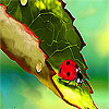 Alone ladybug on the leaf puzzle